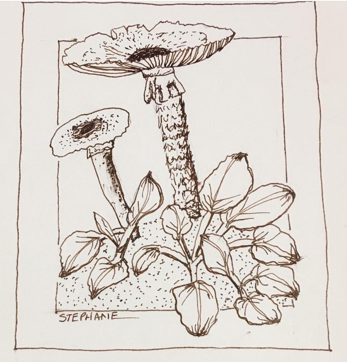 Mushrooms in Black Mountain, North Caroline | Prof. Stephanie Sipp